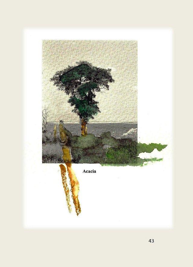 Los-arboles-solitarios-43.jpg